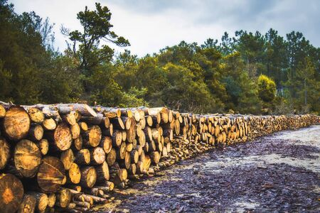 Stacked logs arranged in a row in jungle