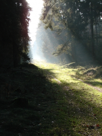 sunbeam in the forest, mist