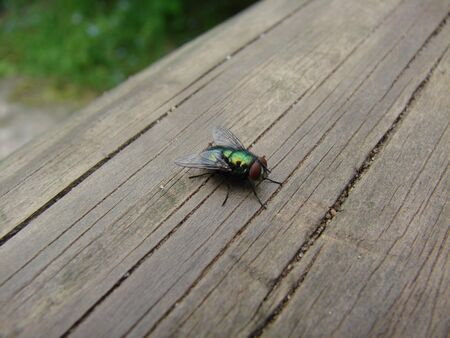 fly on wooden beams Stock Photo - 15695857