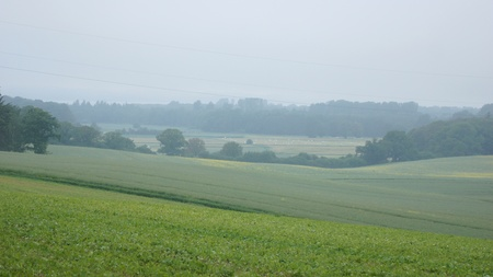 reported: fog over fields and reported - landscape