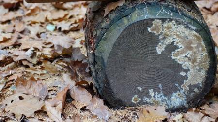 diseased: autumn leaves and tree