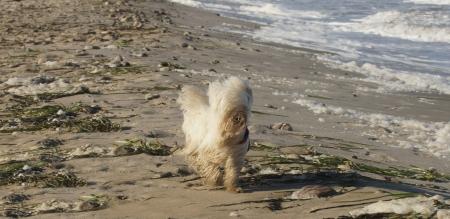 litle: litle dog and wind
