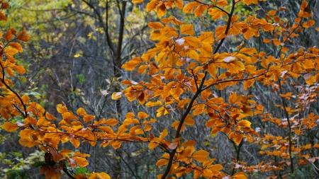 autumn motif: autumn