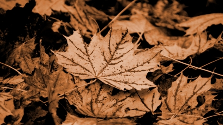 autumn motif: leaves abstract