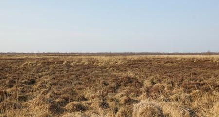 dry grasses in the marsh - spring