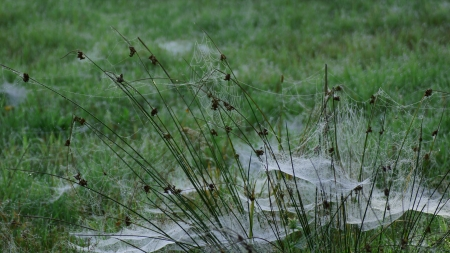 many small beautiful cobwebs and green meadow in autumn photo