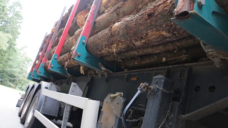 transportation of tree trunks with truck photo