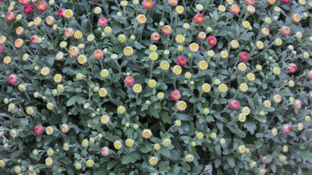 budding flowers photo