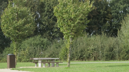recycle area: rest area with table and benches and green trees and grass