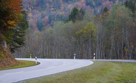 autumn motif: forest and autumn and road