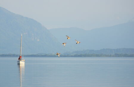Sailboat and flying ducks on Lake Chiemsee in Germany in Europe photo