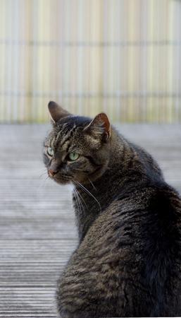 trustful: beautiful cat