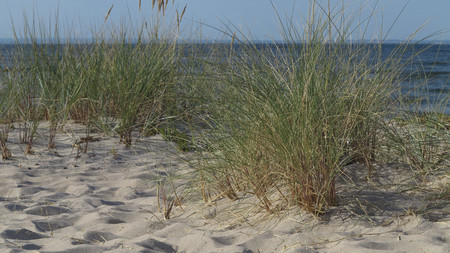 beautiful wild beach on the Baltic Sea photo