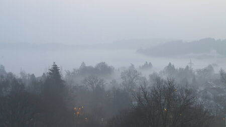 fog and tree tops photo