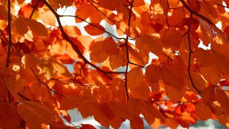 impermanent: background autumn