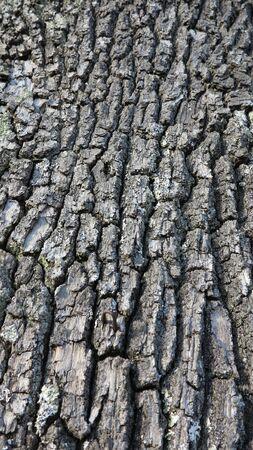 beautiful gray old rough tree bark Stock fotó
