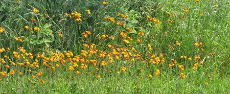 country flowers Stock fotó