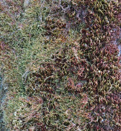moss on a tree trunk Stock fotó