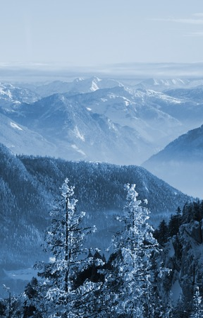 misty and snowy peaks of the mountains and trees