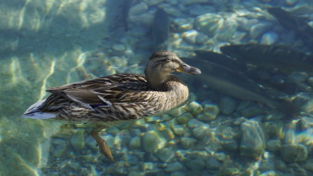 sunbathing at a happy duck and water