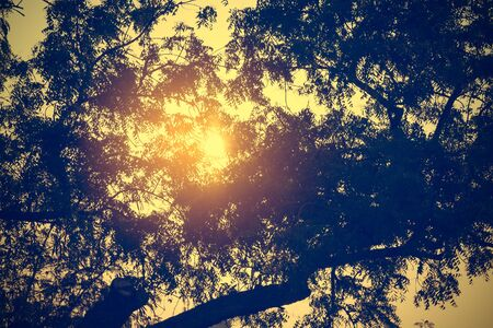 looking through an object: Golden beautiful sunset, through tree leaves. Selective focus, toned