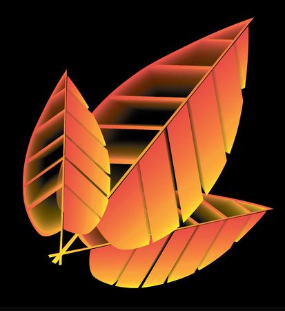 three leaf: three yellow tree wilted leaf against a black background