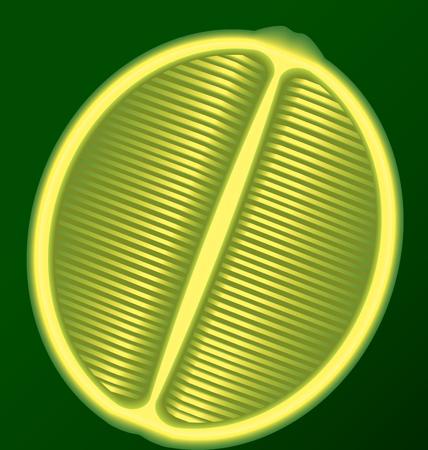 longitudinal: fresh lime in a longitudinal section on a green background Illustration