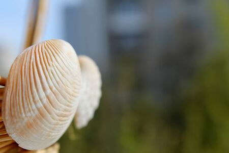 molluscs: empty shells of molluscs on the background buildings. Wicker basket