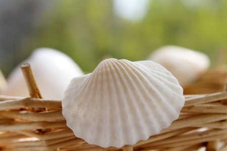 empty shells of molluscs on the background. Wicker basket Stock fotó