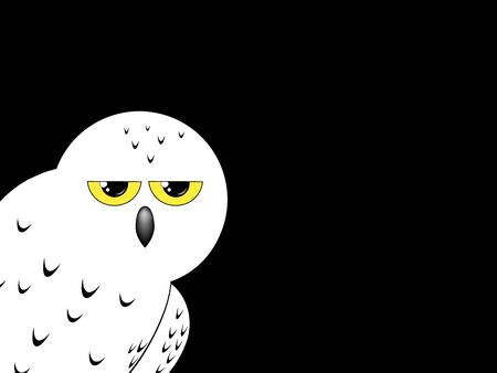 White snowy owl isolated on a black background