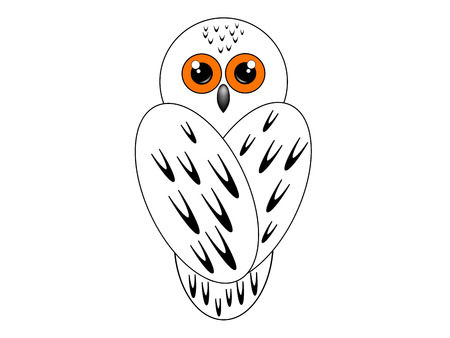 Snowy owl sits with his back on a white background