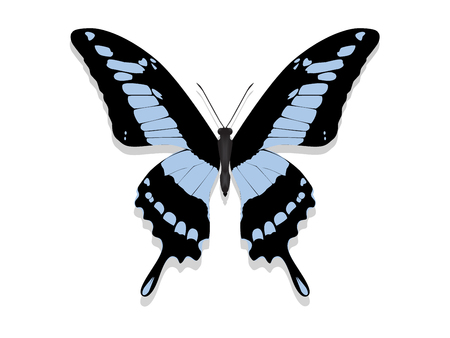 Large butterfly with black wings and blue patterns.