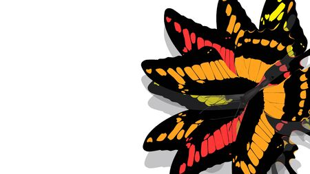butterfly with black wings and Orange patterns
