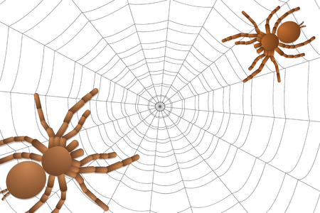 two spiders of a tarantula on a cobweb, top view