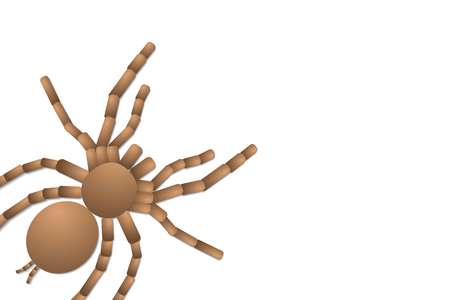 spider tarantula on white background, top view