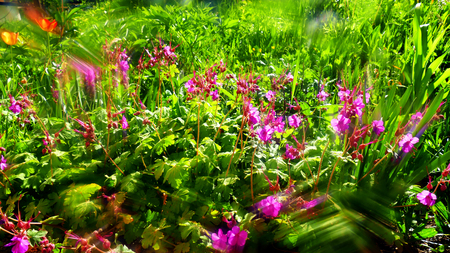 Geranium and grass in backlight with an optical filter.