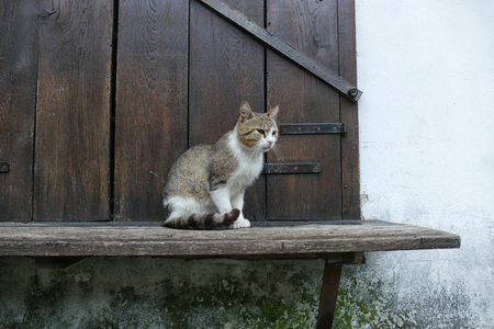 Home cat against the background of an old house. Stok Fotoğraf