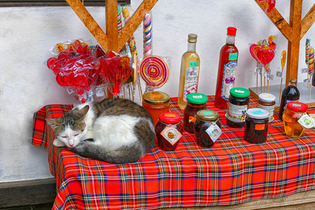Domestic cat sleeping on the stall with home delicacies.