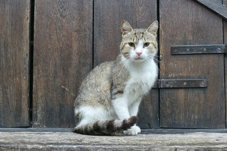 Home cat against the background of an old house. Stock Photo