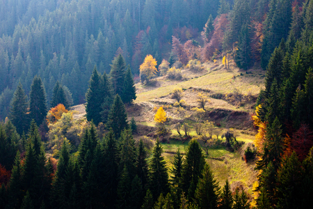 Autumn in the Rhodope Mountains, Bulgaria. Pine forest with sunny meadows. Mountain landscape. Reklamní fotografie - 110009368