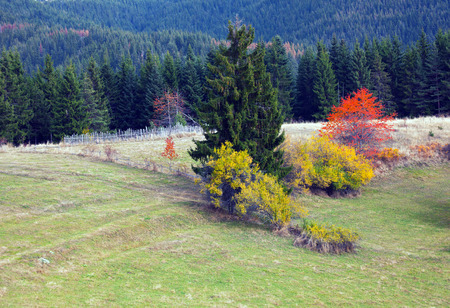 Autumn in the Rhodope Mountains, Bulgaria. Pine forest with sunny meadows. Mountain landscape.