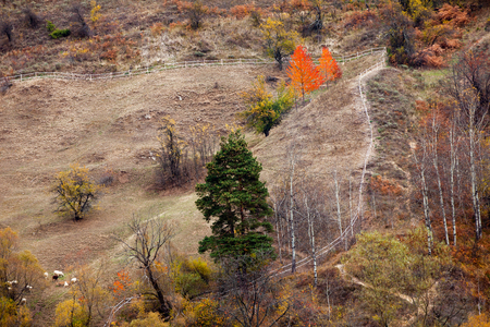 Mountain pasture for sheep. Organic livestock farming. Autumn in the Rhodope Mountains, Bulgaria.
