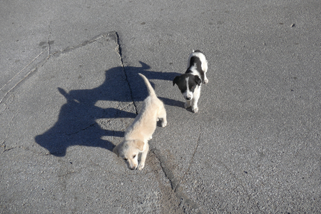 Two small stray dogs. Asphalt road. Low sun.