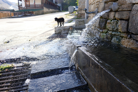 Rural fountain. Bumpy water. A little dog wants to drink water.
