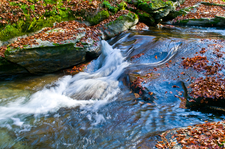 Autumn landscape. Mountain stream with fallen leaves.