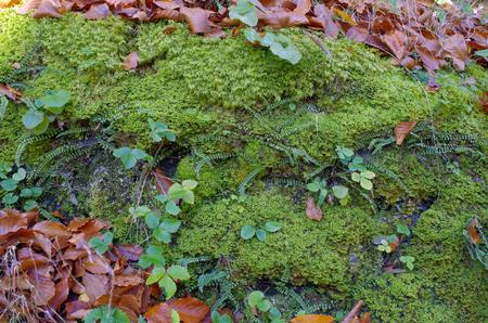 Moss and fallen leaves. Autumn still life. Reklamní fotografie