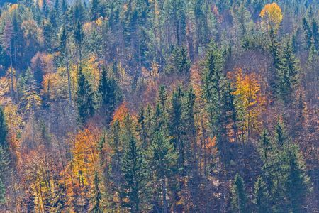 Autumn color mixed forest. Reklamní fotografie - 134420474