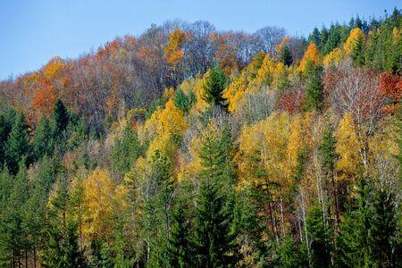 Autumn color mixed forest. Reklamní fotografie - 134420482