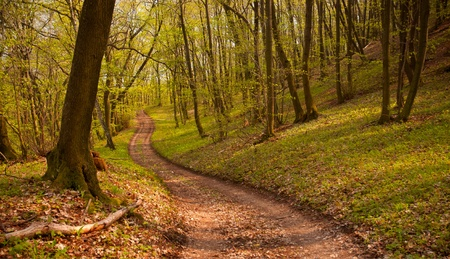 Pathway in forest photo