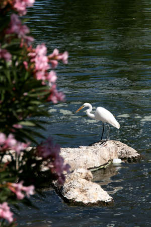 bird sanctuary: Lake at bird sanctuary